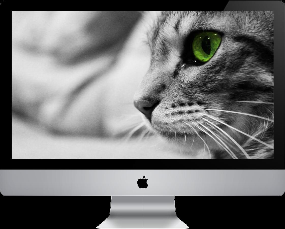 SEO Website Designer